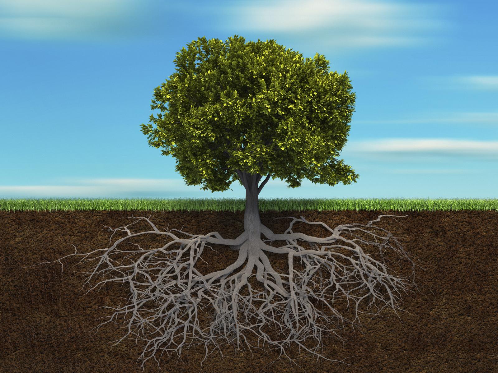 大きな木は大きな根っこがあってこそ
